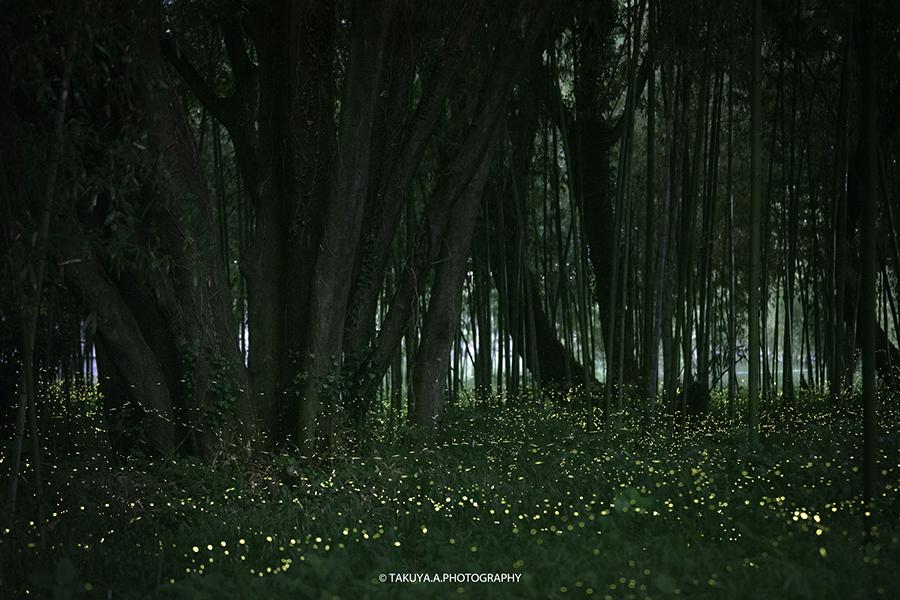 岐阜県の絶景 竹林広場公園のヒメボタル