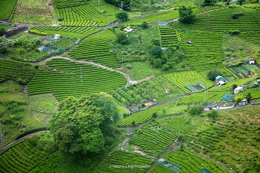 岐阜県の絶景 天空の茶畑 上ヶ流茶園