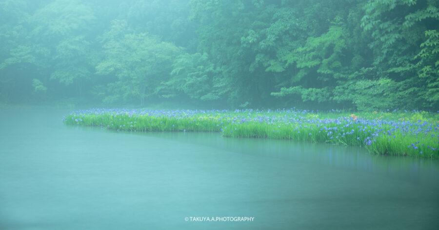 滋賀県の絶景 平池のカキツバタ