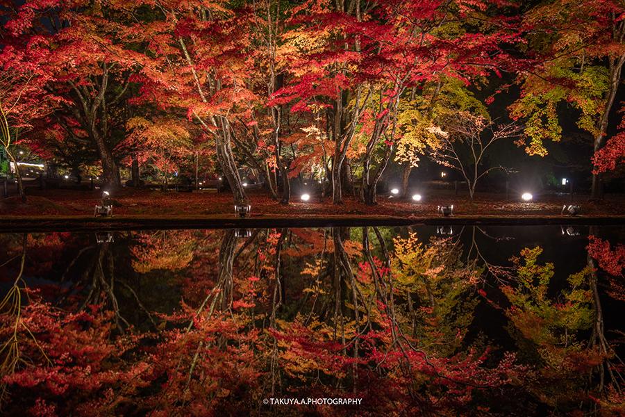 岐阜県の絶景 曽木公園の紅葉ライトアップ