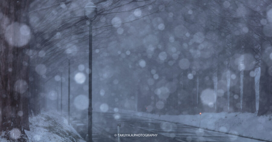 滋賀県の絶景 メタセコイア並木の雪景色