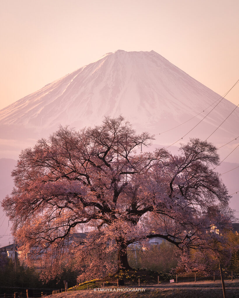 山梨県の絶景 わに塚の桜