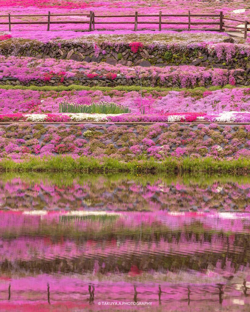 岐阜県の絶景 國田家の芝桜