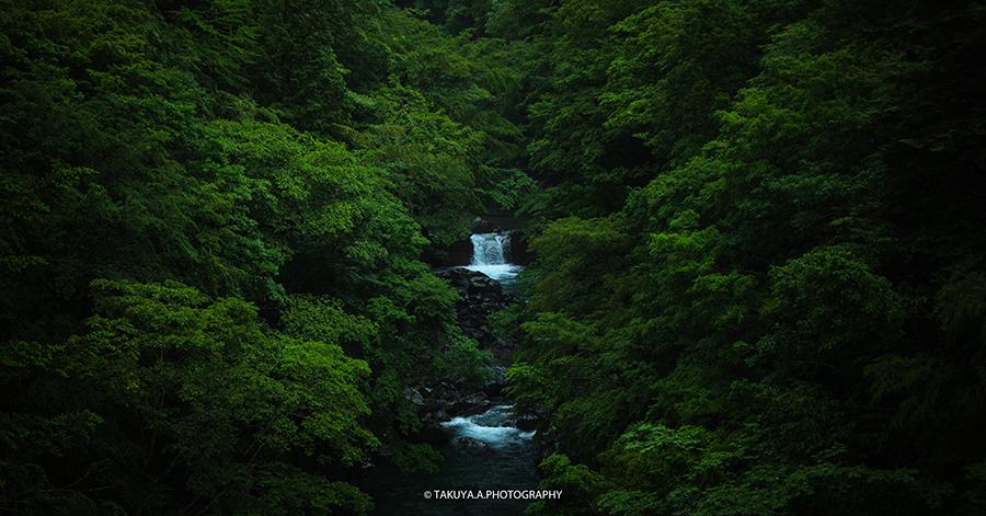 岐阜県の絶景 付知峡本谷橋の新緑