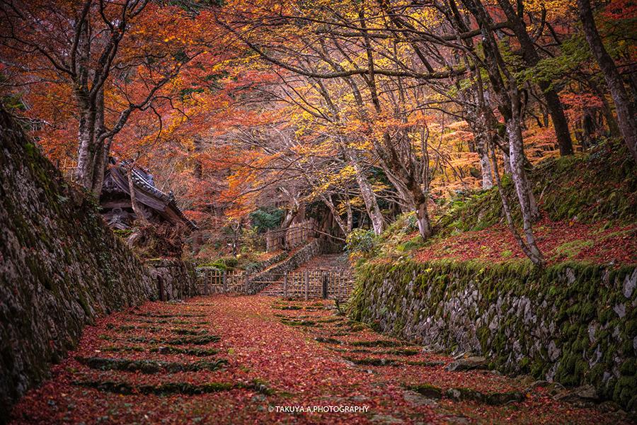 滋賀県の絶景 百済寺の散紅葉