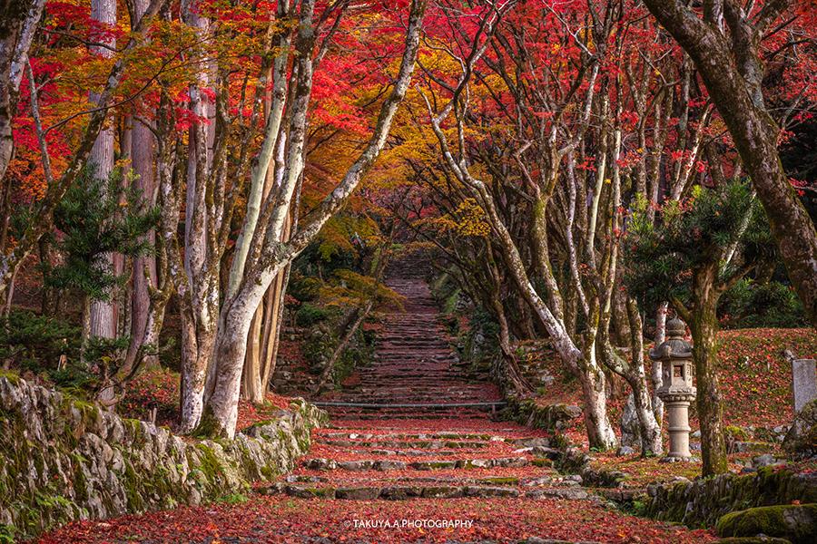 滋賀県の絶景 鶏足寺の散紅葉