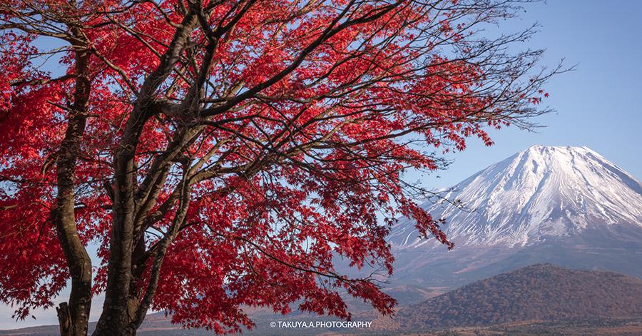 山梨県の絶景 精進湖の富士山と紅葉