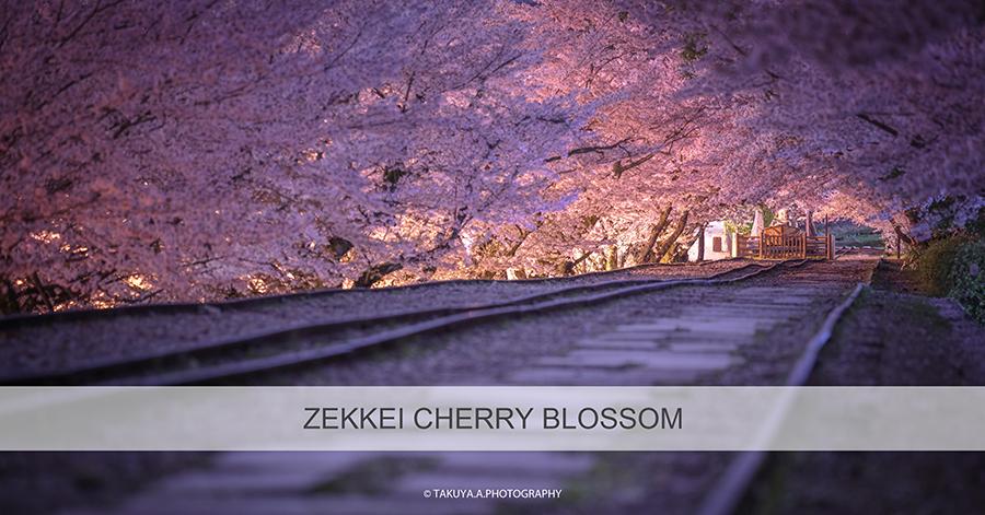 絶景まとめ 桜の絶景スポット