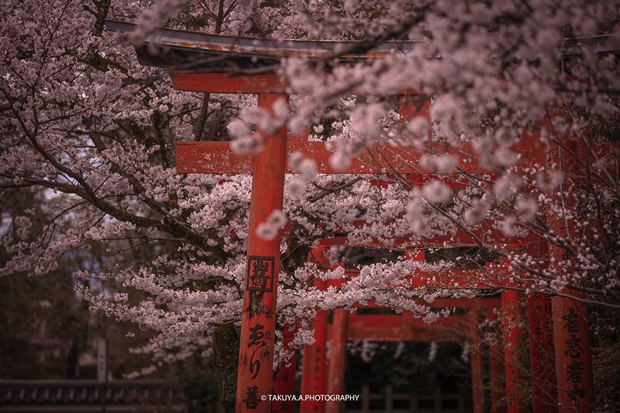 京都府の絶景 竹中稲荷神社の桜