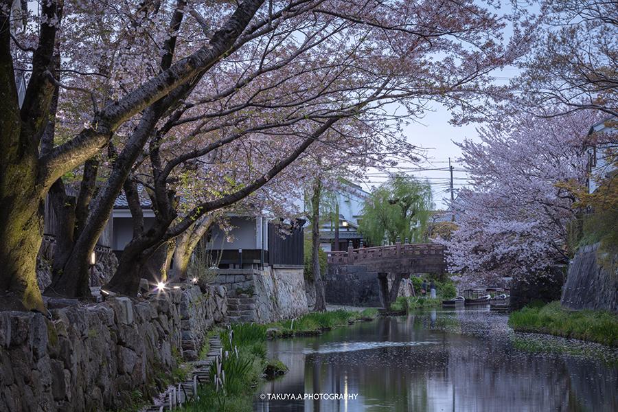 滋賀県の絶景 八幡堀の桜