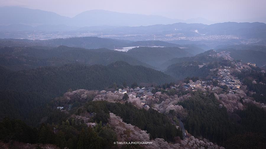奈良県の絶景 吉野山花矢倉展望台の桜