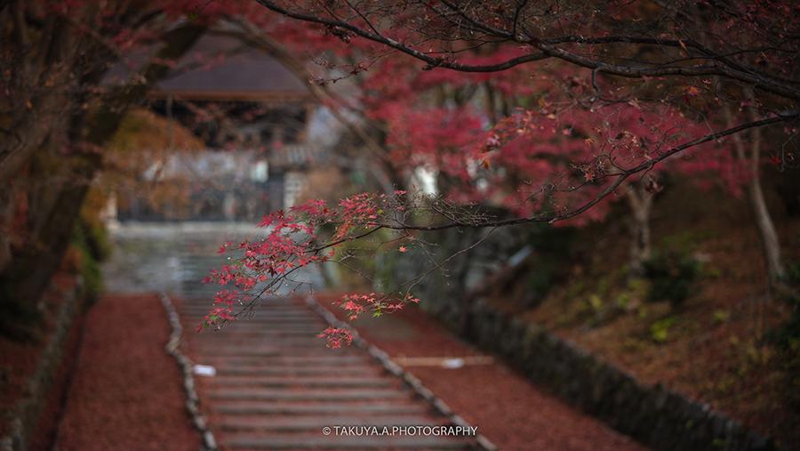 京都府の絶景 毘沙門堂門跡の散紅葉