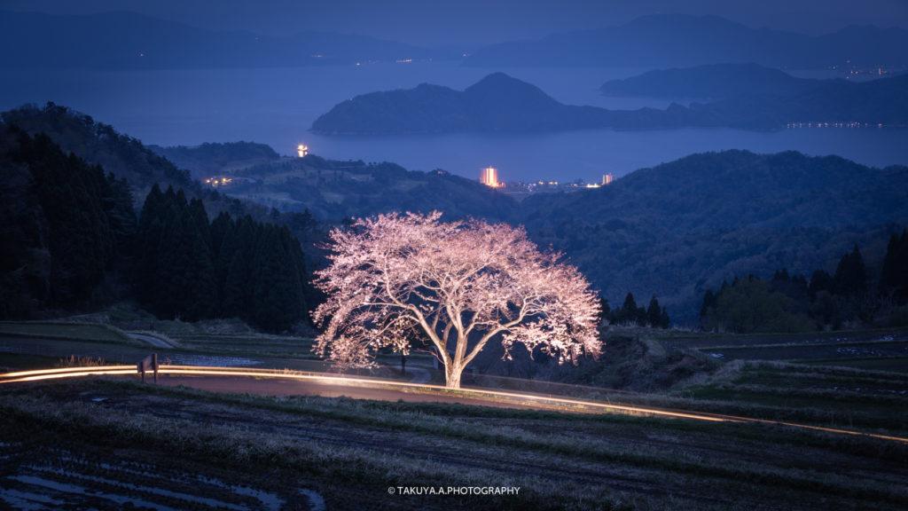 京都府の絶景 松尾の一本桜