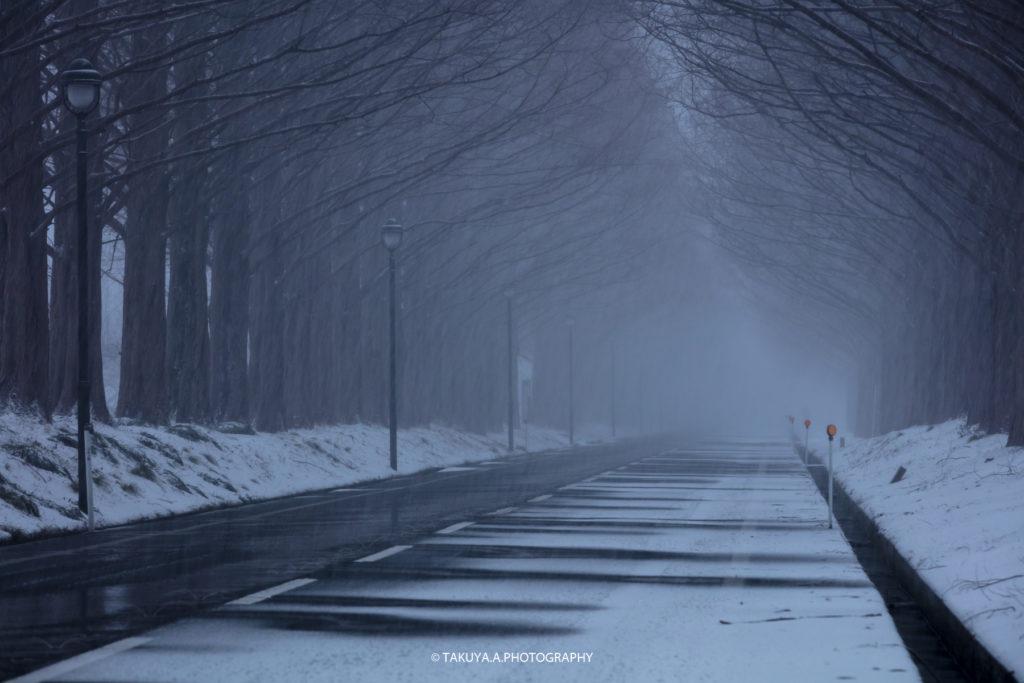 滋賀県の絶景 メタセコイア並木の雪景色1
