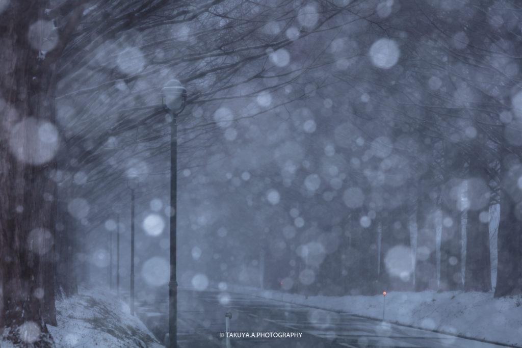 滋賀県の絶景 メタセコイア並木の雪景色2