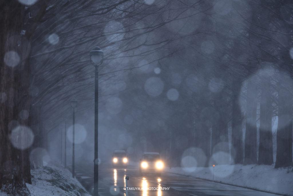 滋賀県の絶景 メタセコイア並木の雪景色3