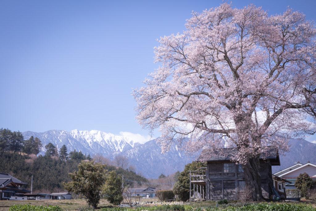 山梨県の絶景 山高の一本桜