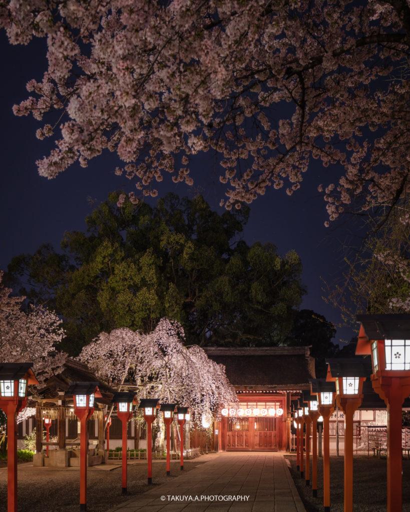 京都府の絶景 平野神社の魁桜