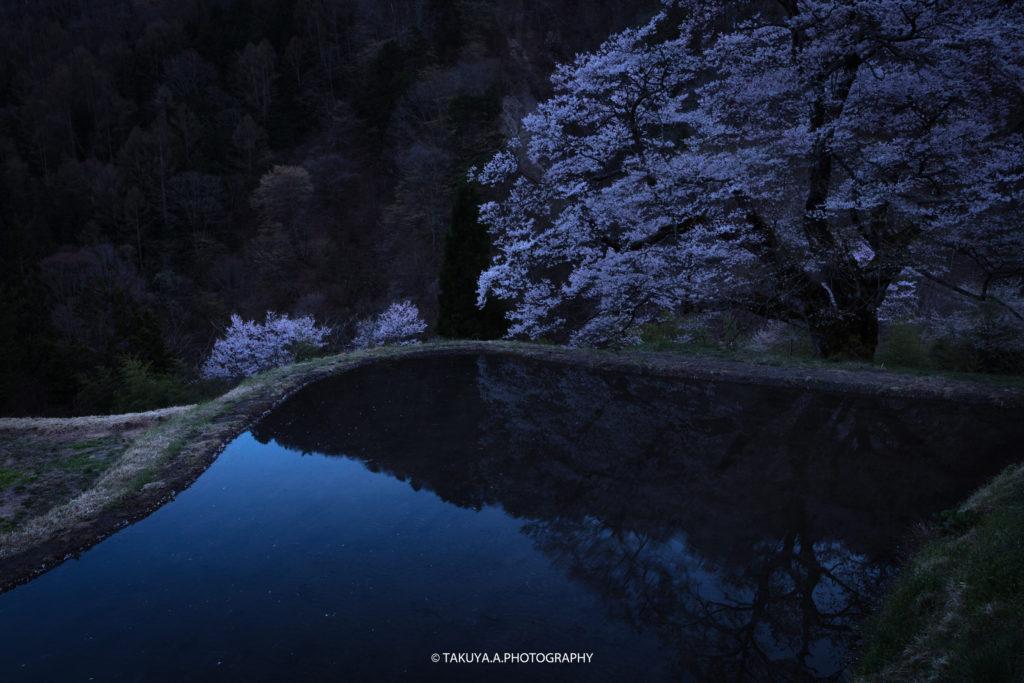 長野県の絶景 駒つなぎの桜