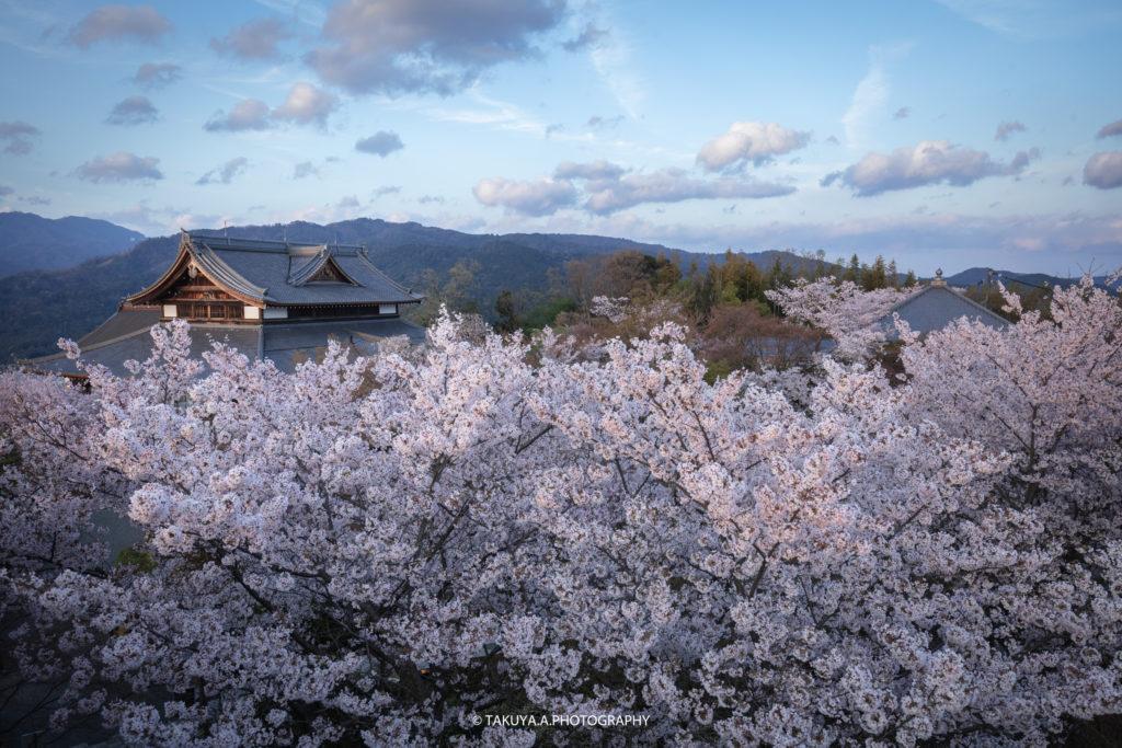 京都府の絶景 将軍塚青龍殿の桜ライトアップ