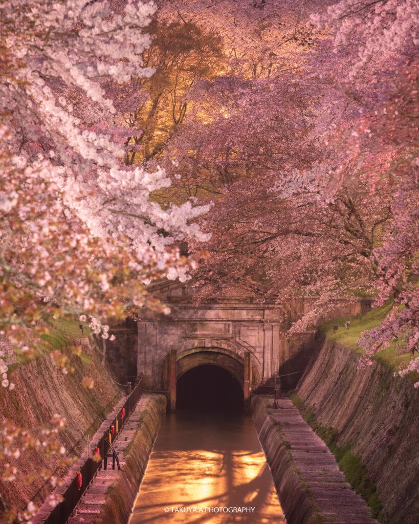 滋賀県の絶景 琵琶湖疎水 桜夜景
