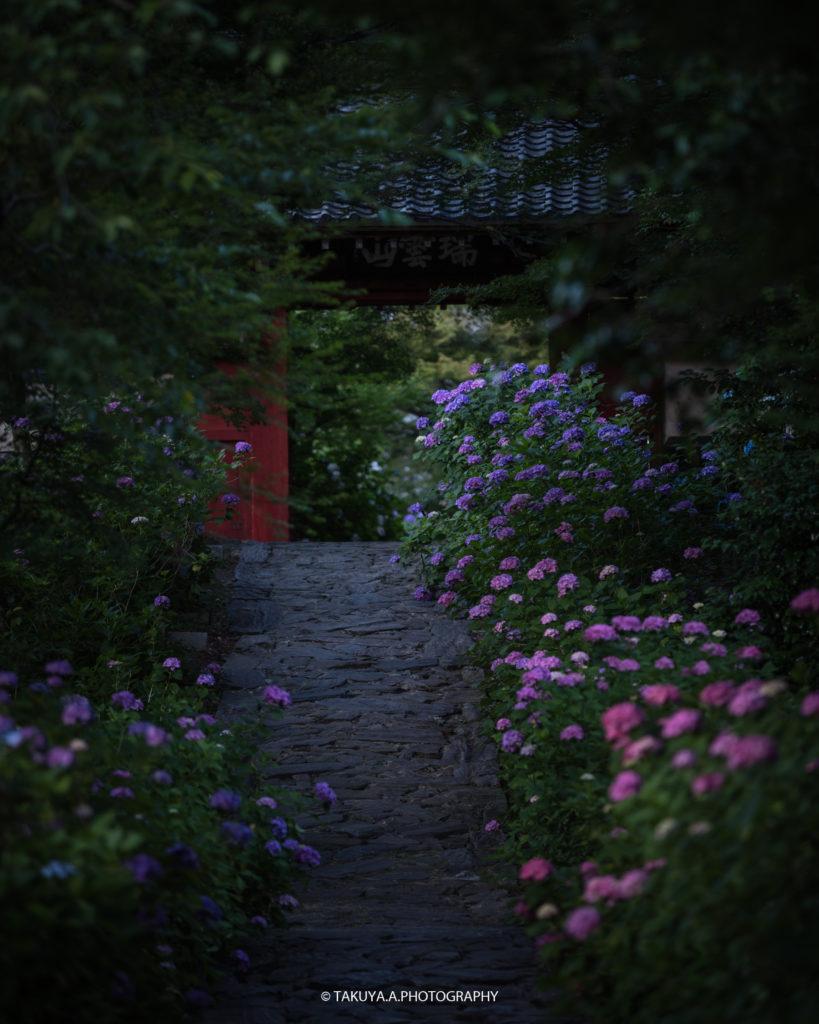 愛知県の絶景 本光寺の紫陽花4