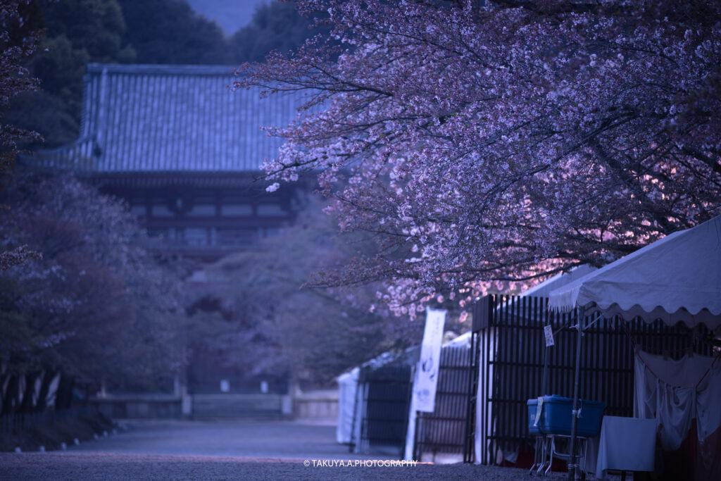 京都府の絶景 醍醐寺の桜 撮影スポット1