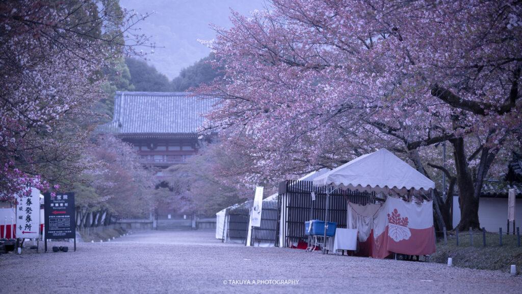 京都府の絶景 醍醐寺の桜 撮影スポット3