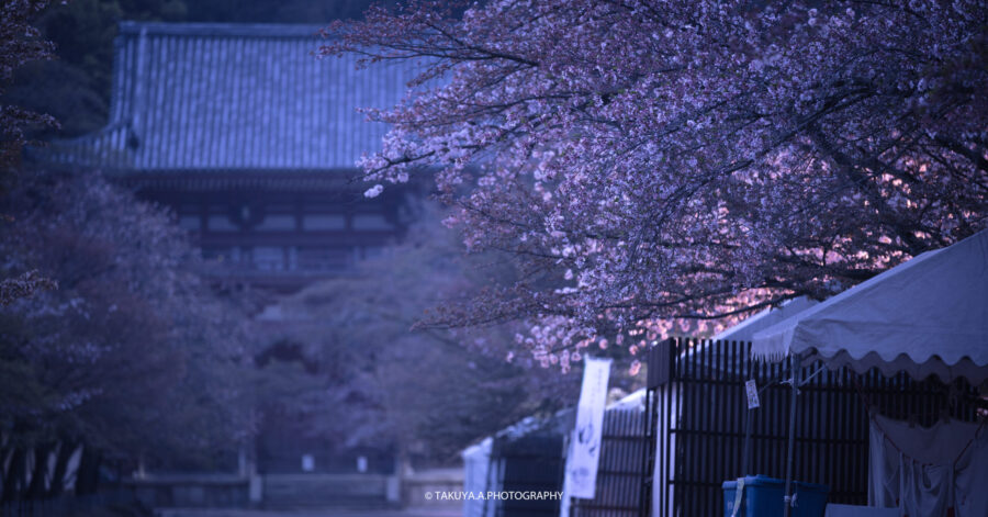 京都府の絶景 醍醐寺の桜
