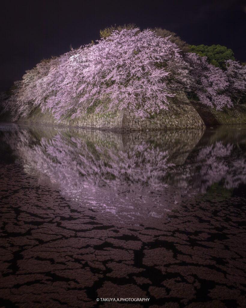 滋賀県の絶景 彦根城の桜ライトアップ