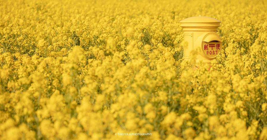 愛知県の絶景 伊良湖岬菜の花ガーデン 菜の花