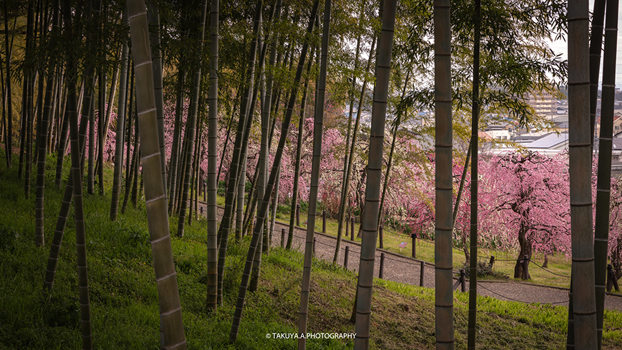 愛知県の絶景 名古屋市農業センターdelaふぁーむの梅