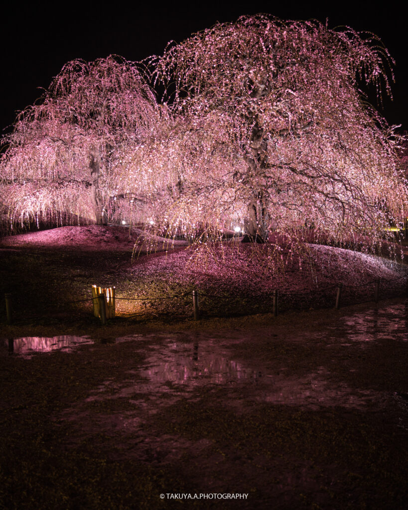 三重県の絶景 鈴鹿の森庭園の梅