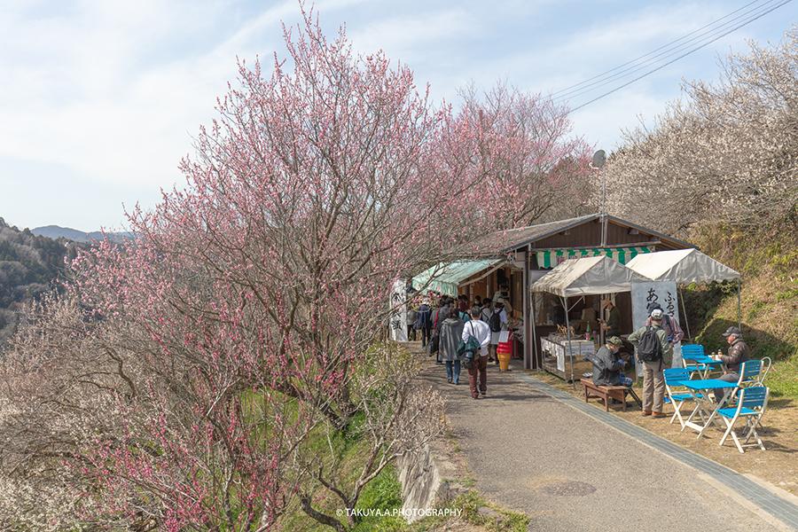 奈良県の絶景 月ヶ瀬梅渓(梅林)の梅