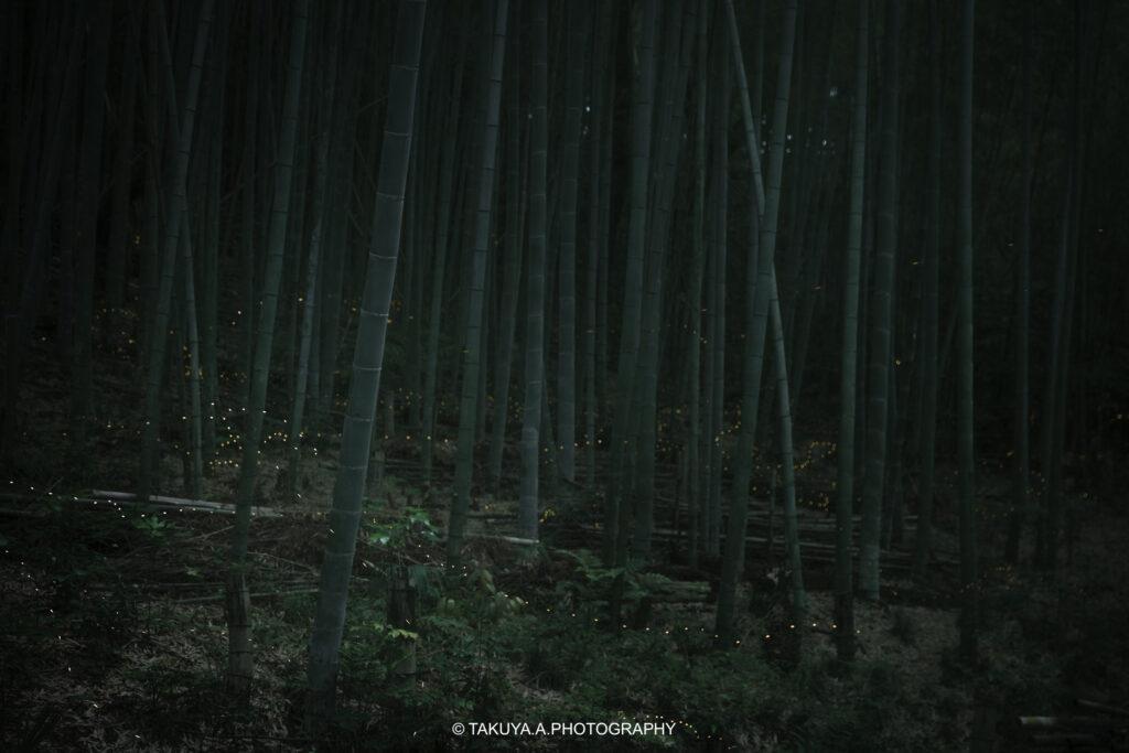 愛知県の絶景 相生山緑地オアシスの森のヒメボタル1