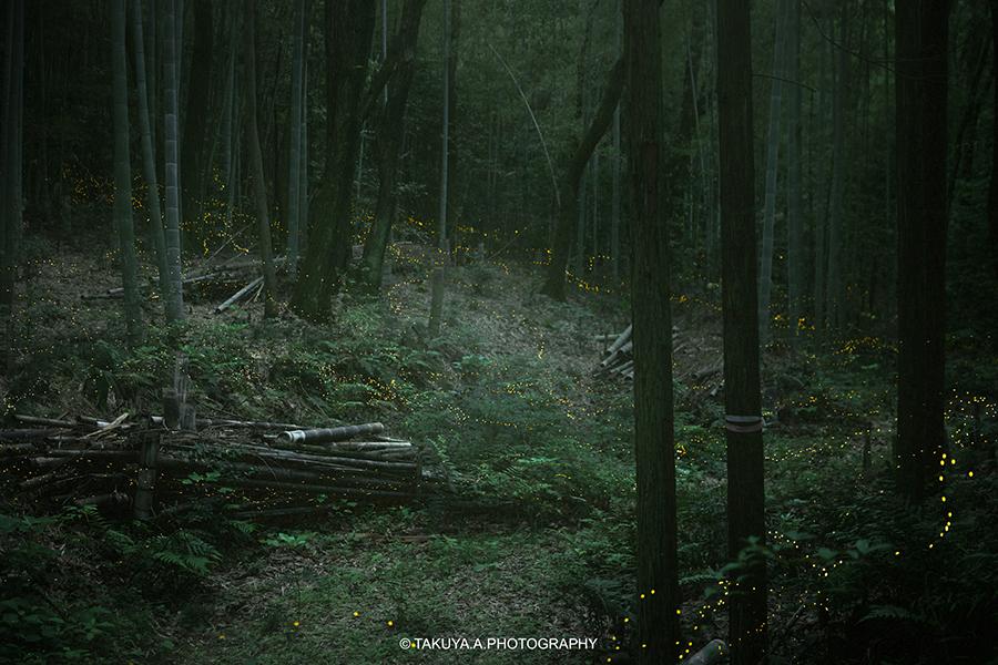 愛知県の絶景 相生山緑地オアシスの森のヒメボタル