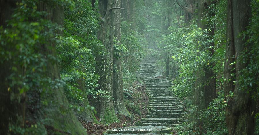 和歌山県の絶景 大門坂の新緑