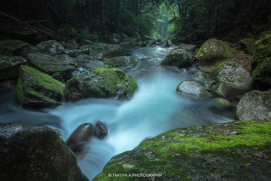 和歌山県の絶景 桑ノ木の滝の新緑