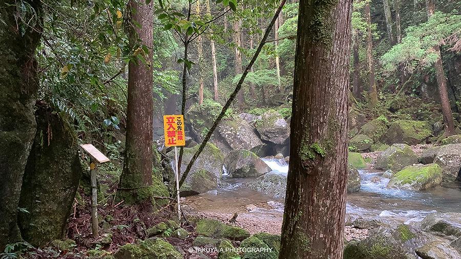 和歌山県の絶景 桑ノ木の滝の新緑 アクセス