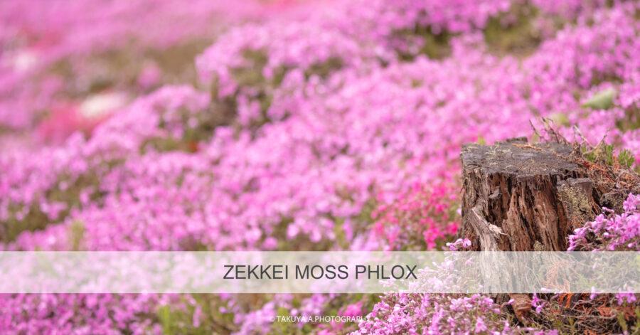絶景まとめ 芝桜の絶景スポット