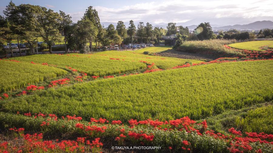 奈良県の絶景 一言主神社の彼岸花