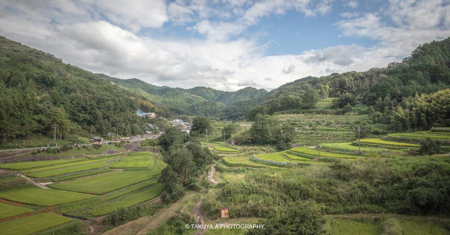 奈良県の絶景 稲渕の棚田と彼岸花