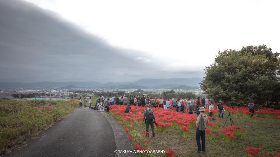 奈良県の絶景 九品寺の彼岸花と朝日 撮影スポットの様子