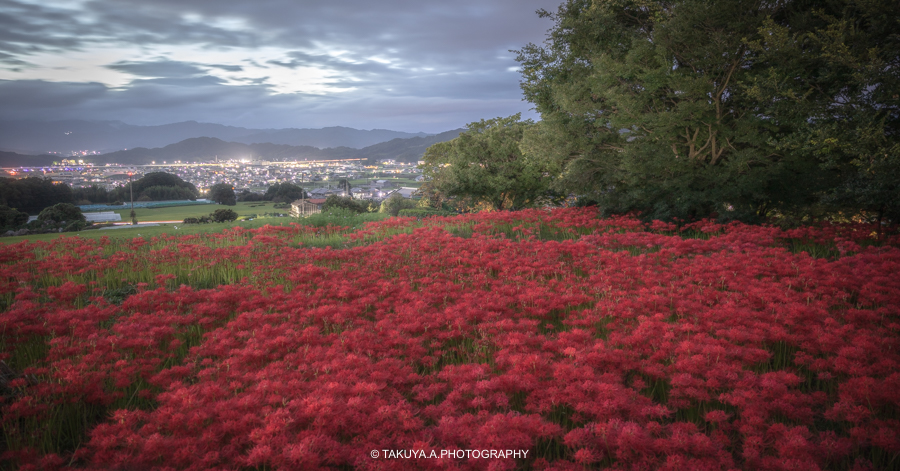 奈良県の絶景 九あ品寺の彼岸花と朝日